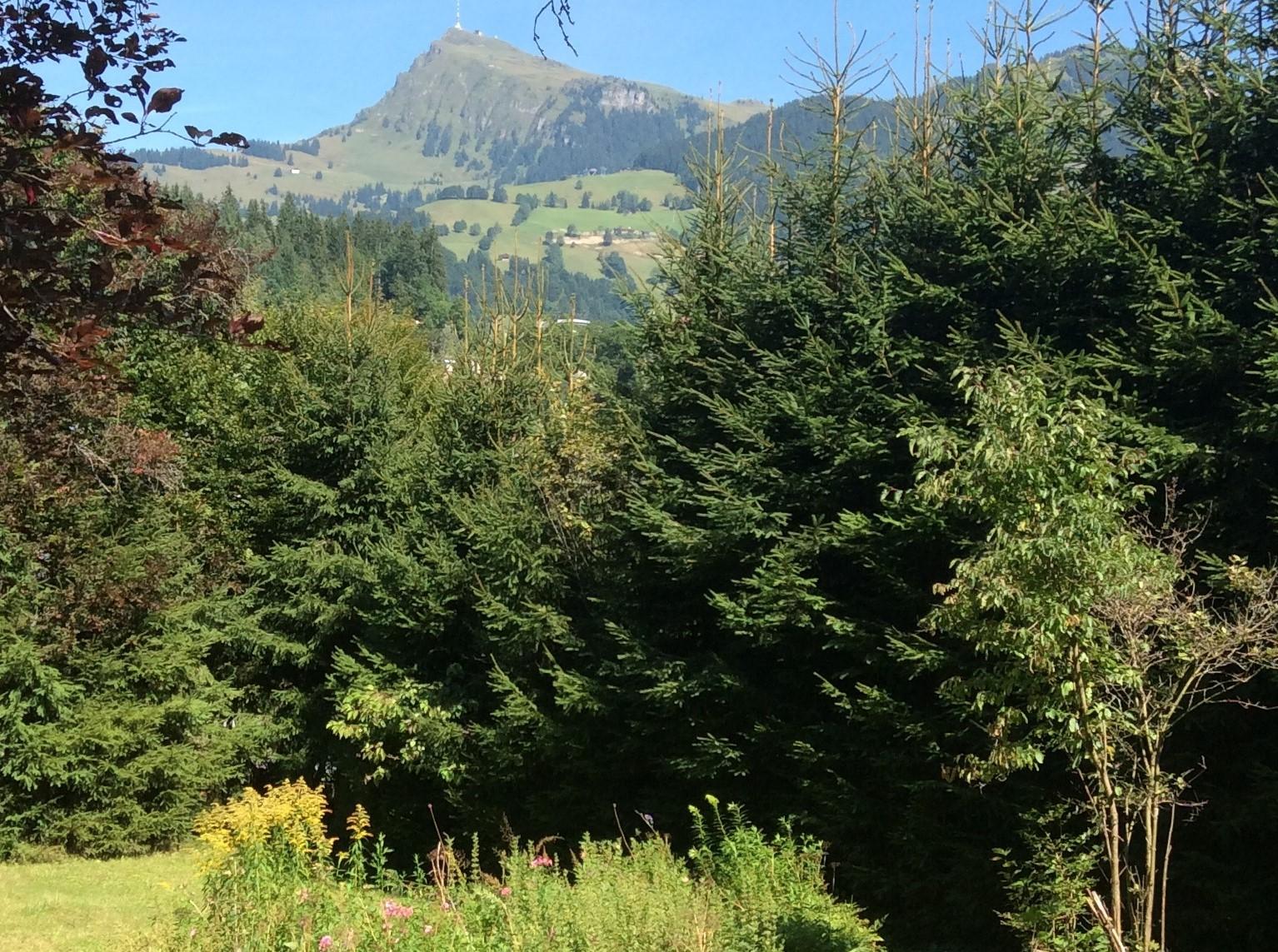 Blick aus der Landhausvilla auf das Kitzbühler Horn