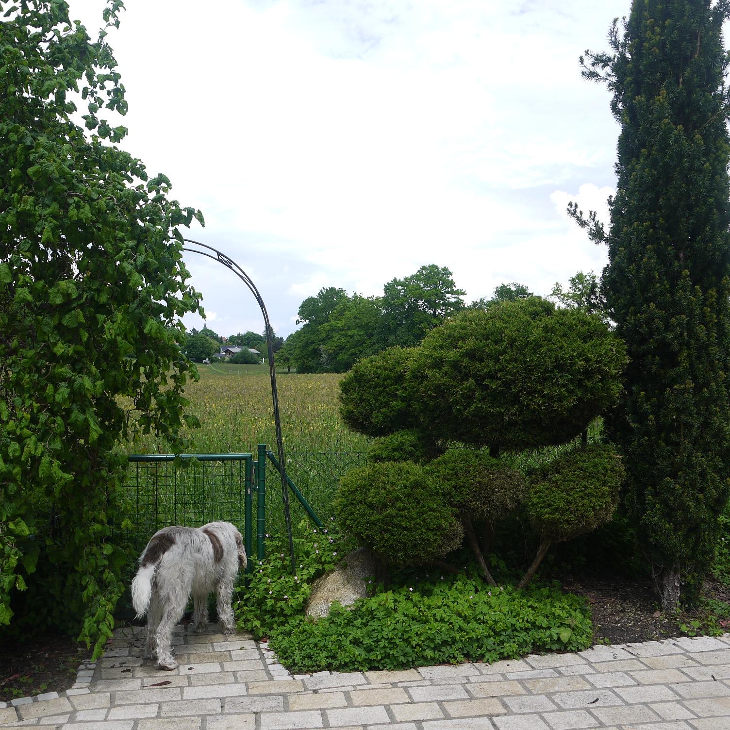 Ausgang vom Landhaus in Berg in das Naturschutzgebiet